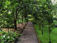 The path through the orchard